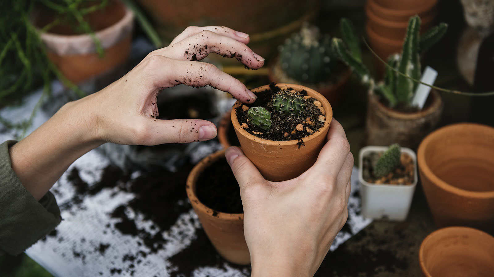 Hands potting a plant in garden