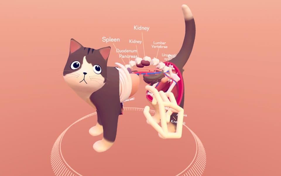 cat-explorer